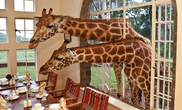 «پارک ملی گیراففی» - کنیا