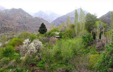 کرمان 2