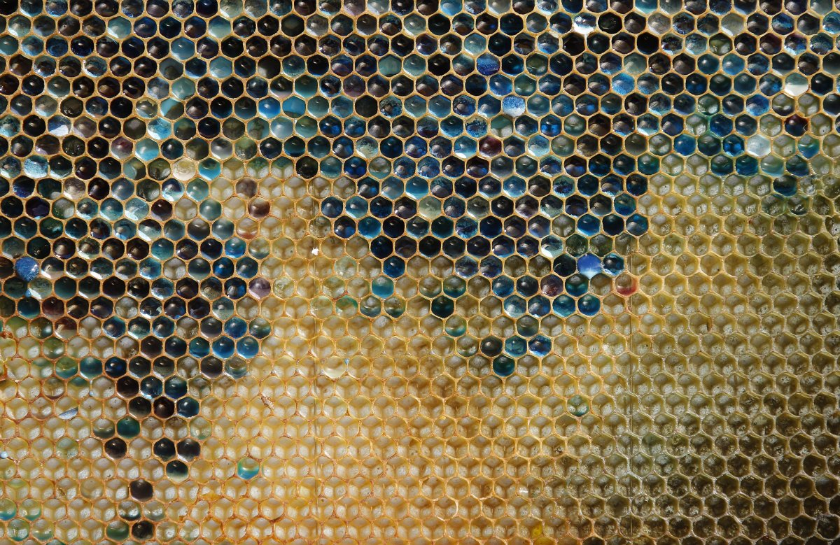 a-bluish-colored-honeycomb-from-a-beehive-is-seen-in-eastern-france-the-unnatural-shades-were-believed-to-be-caused-by-residue-from-containers-of-mms-candy-processed-at-a-nearby-biogas-plant