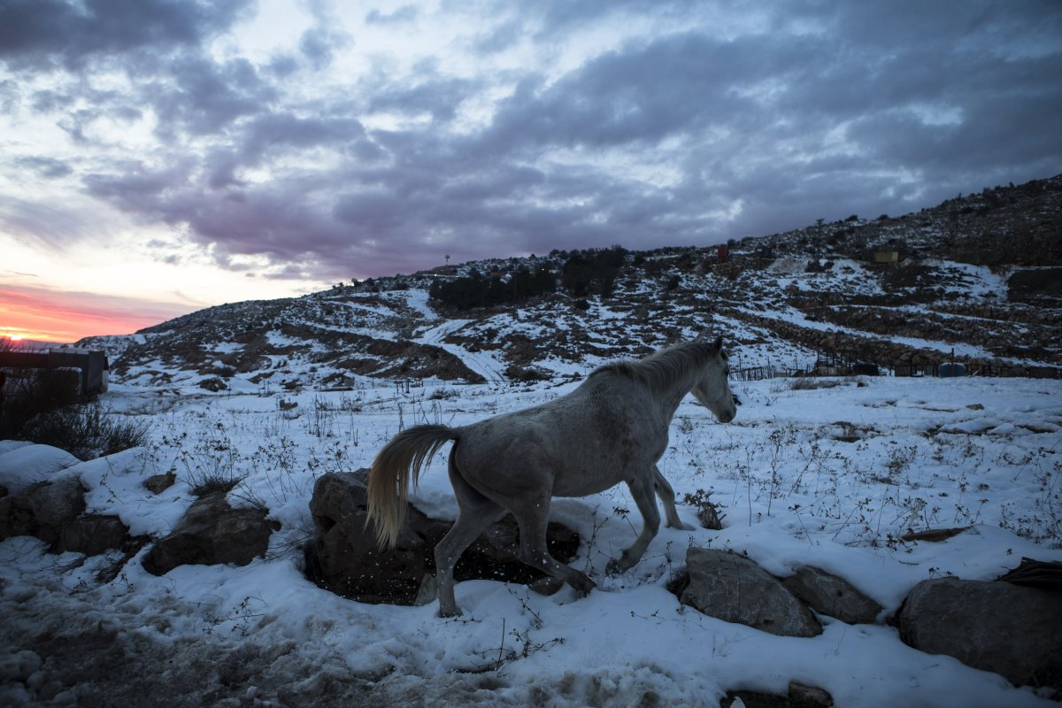 a-horse-walks-in-the-snow-at-the-base-of-mount-hermon-in-the-golan-heights-near-the-israel-syria-border