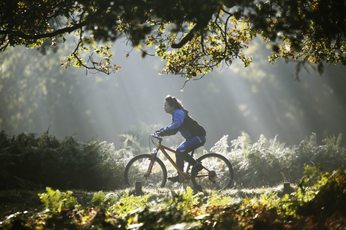 a-woman-cycles-in-the-early-morning-autumn-sunshine-in-londons-richmond-park