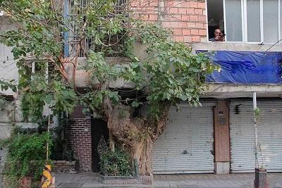 درخت1