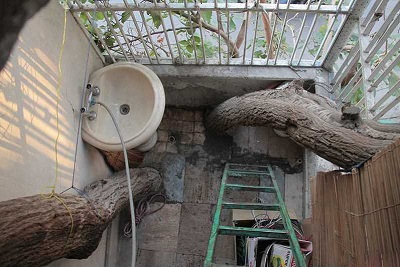 درخت2