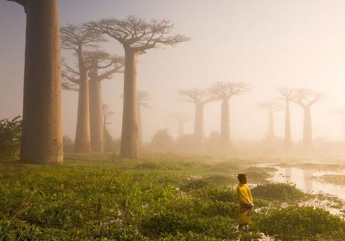 ماداگاسکار