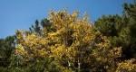 ثبت درختانی درمیان استان خراسان جنوبی در فهرست میراث طبیعی ملی